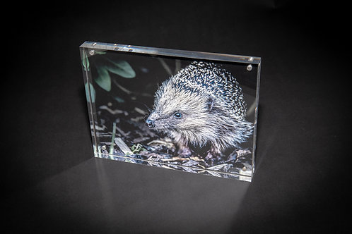 Hungry Hedgehog Acrylic Block