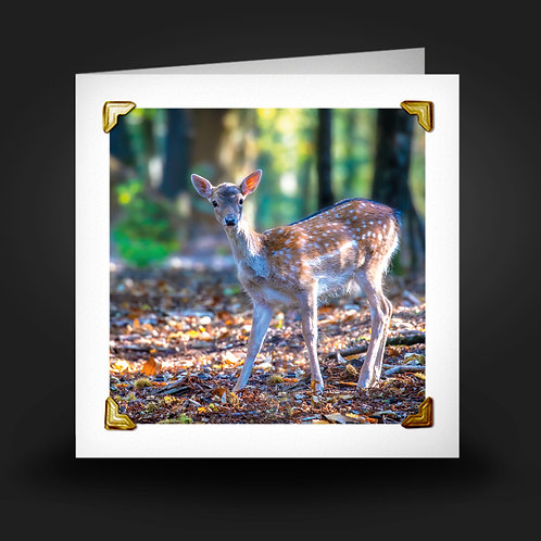 Bambi in the Woods - Greetings Card