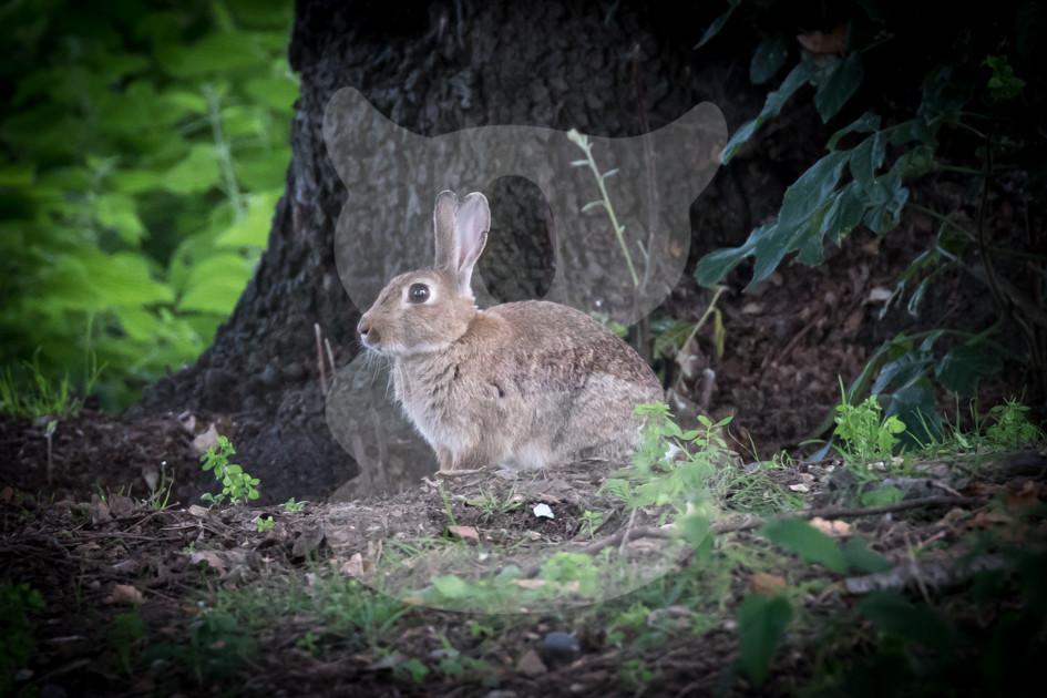 Rabbit in the woods