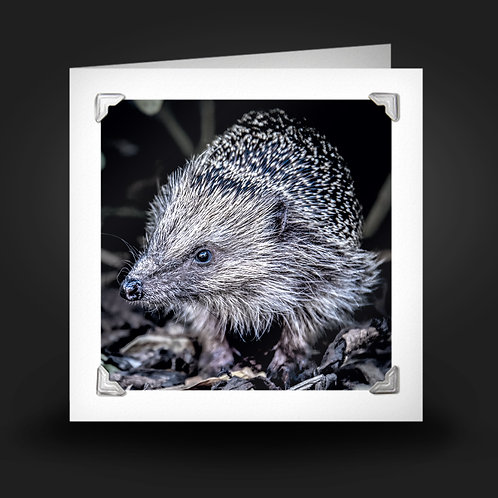 Hungry Hedgehog - Greetings Card