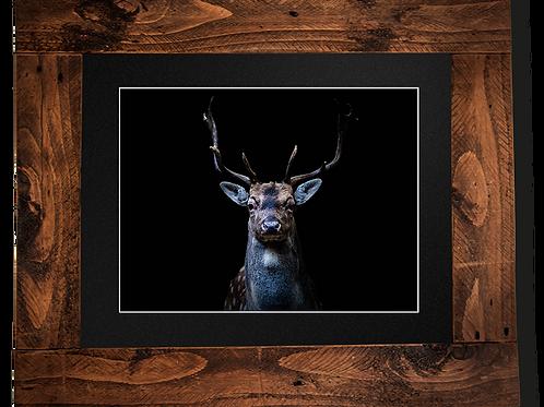 Handsome Buck - Framed artwork