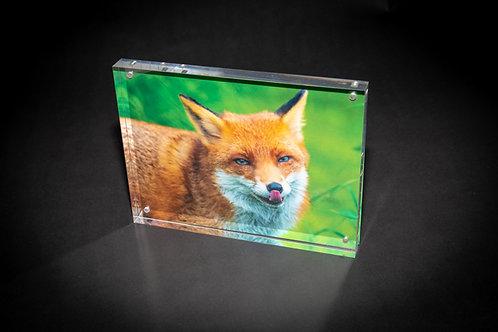 Licking Fox Acrylic Block