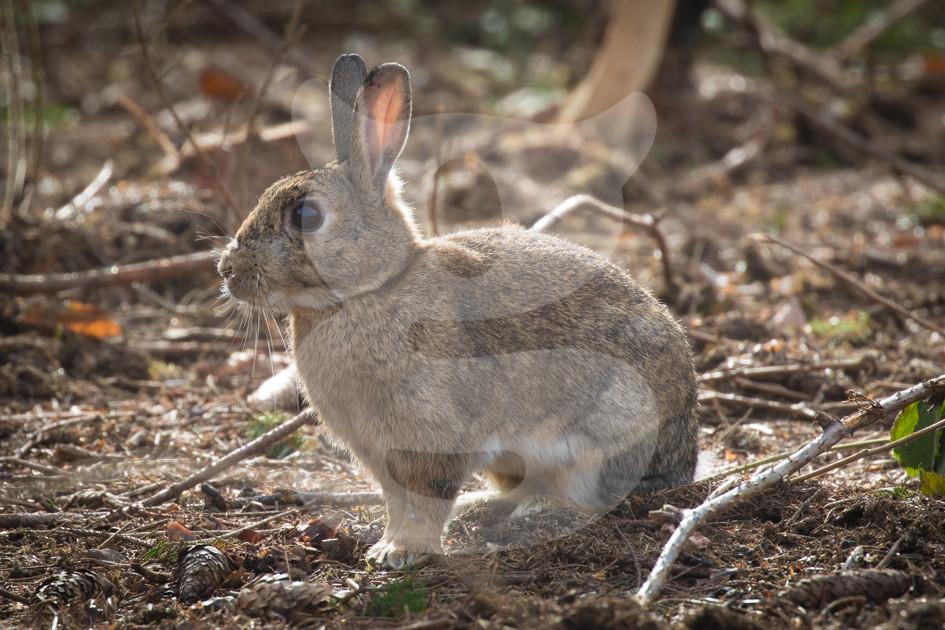 Rabbit taking a break
