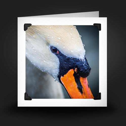 Eye of the Swan - Greetings Card