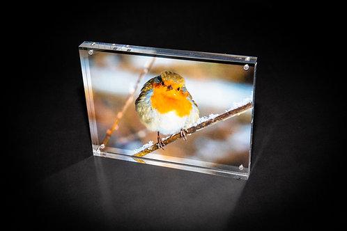 Frosty Robin Acrylic Block