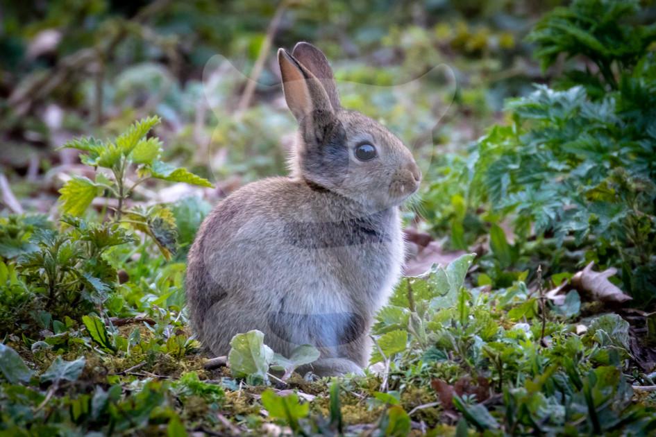Young rabbit kit exploring