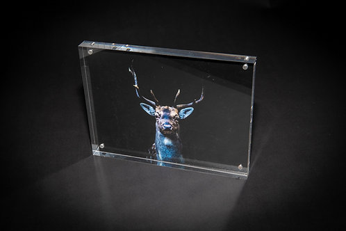 Handsom Buck Acrylic Block