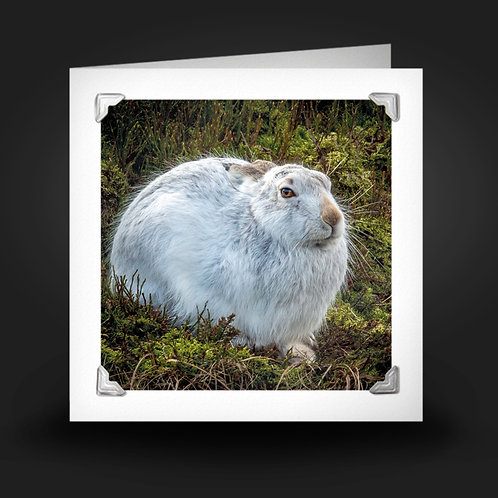 Wise Old Hare - Greetings Card