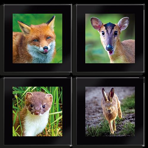 Coaster Set of 4 - Mammal Set