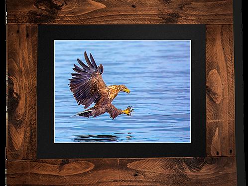 Eagle over water - Framed artwork