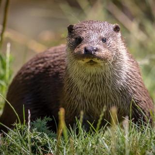 Otter >>