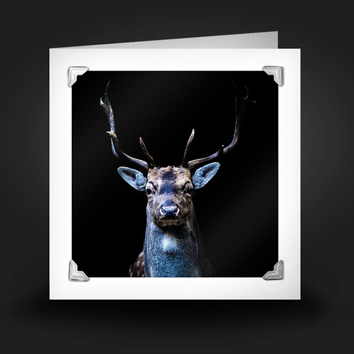 Handsome Buck - Greetings Card