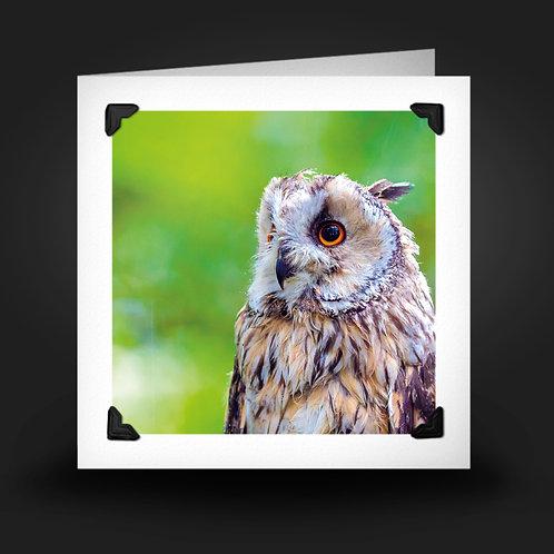 Wise Owl - Greetings Card