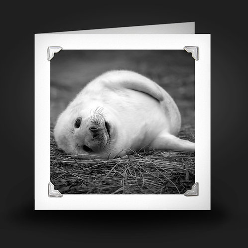 Rolling Baby Seal - Greetings Card