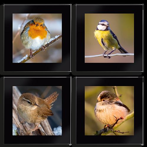 Coaster Set of 4 - British Bird set