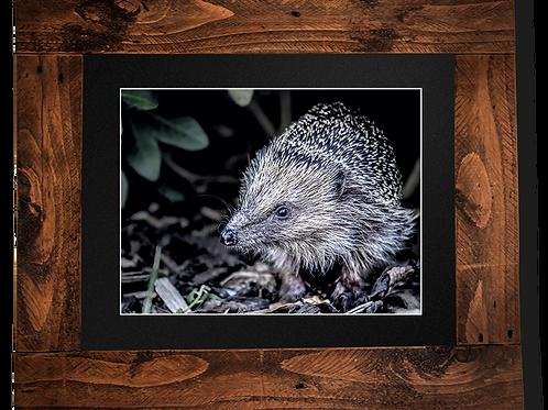 Hungry Hedgehog - Framed artwork