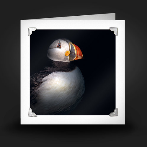 Puffin - Greetings Card