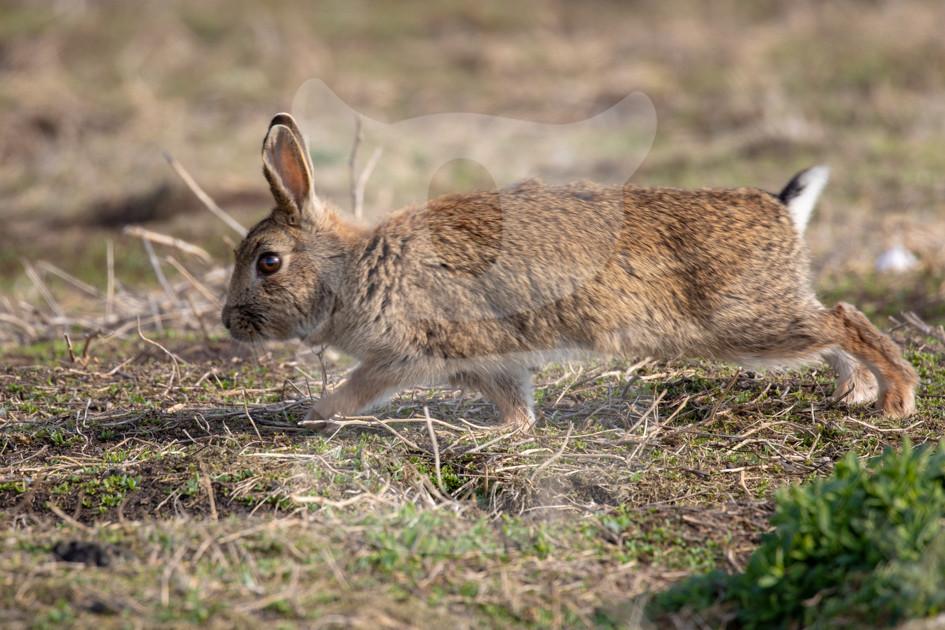 Stretching rabbit