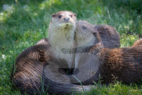 Otter group
