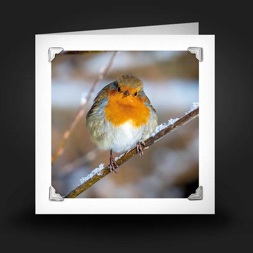 Frosty Robin - Greetings Card