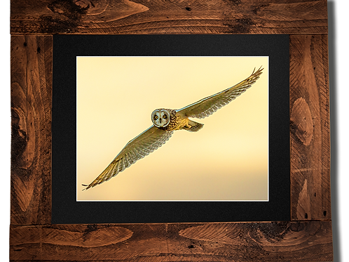 Short-Eared Owl at dusk - Framed artwork