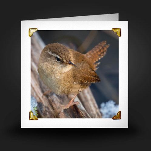 Little Wren - Greetings Card