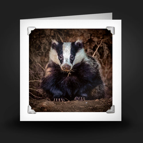 Bold Badger - Greetings Card
