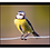 Thumbnail: Placemat set of 4 - Birdlife set