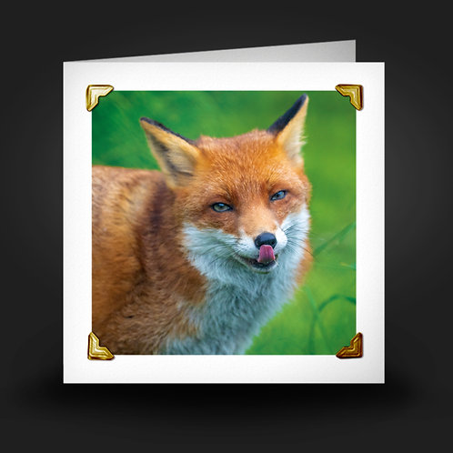 Licking Fox - Greetings Card