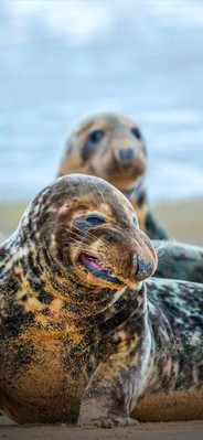 Gnarly Seal