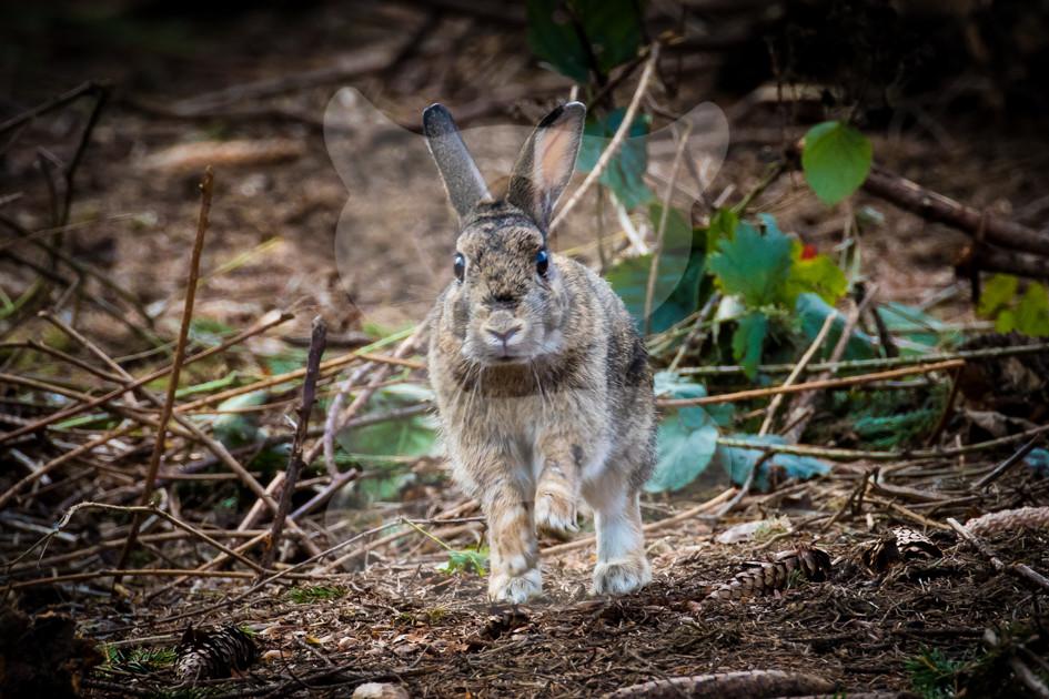 Bounding scruffy rabbit