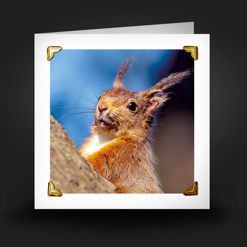 Tufty Red - Greetings Card