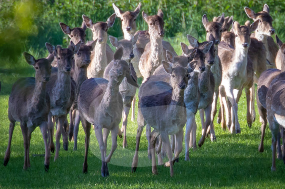 Fallow group, funny face