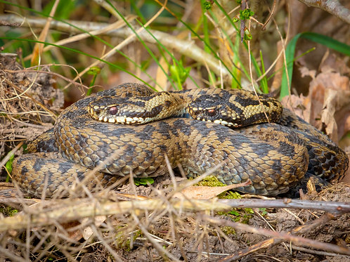 Pair of Adders