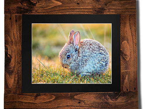 Baby Binky - Framed artwork