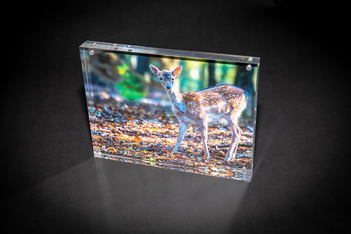 Bambi in the Woods Acrylic Block