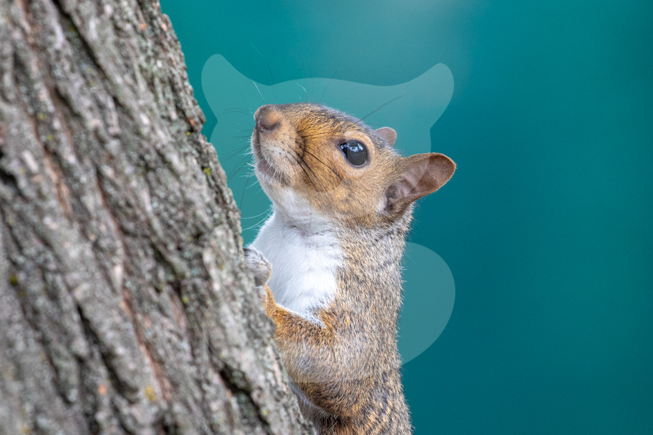 Squirrel on tree blue background