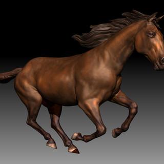 Horse studio