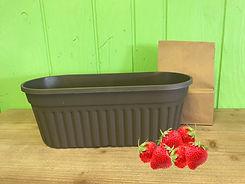 Strawberry Grow Kit