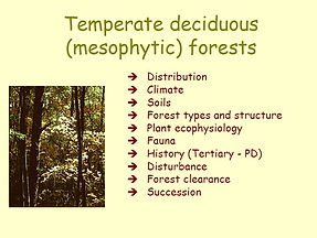04-deciduous-forests-thumb.jpg