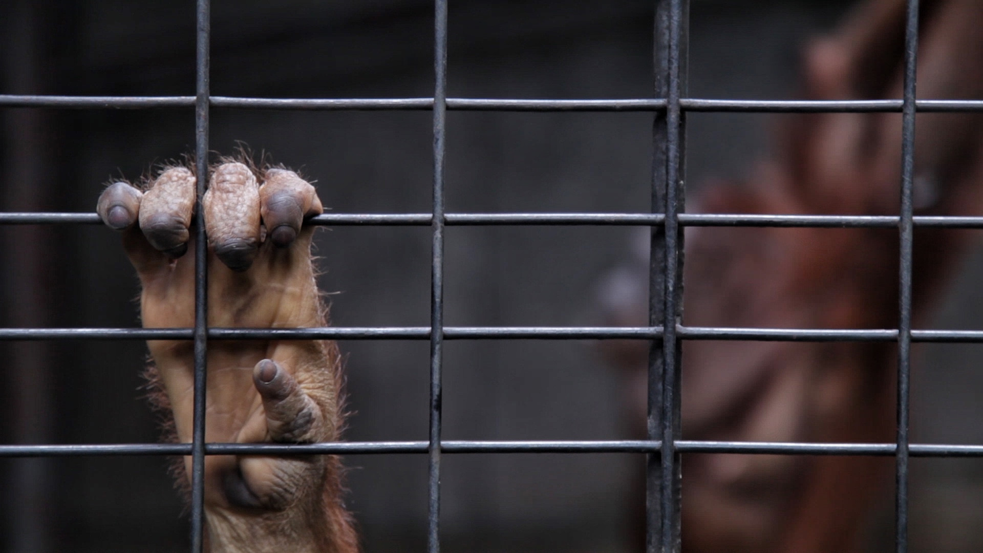 Pata-Zoo-orang-utan.jpg