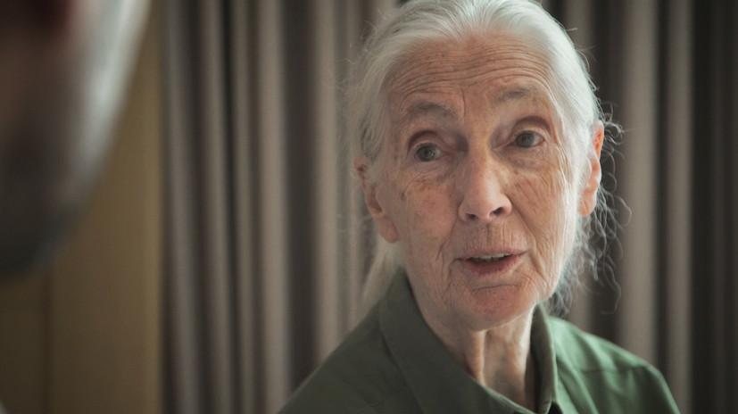 Jane-Goodall-.jpg