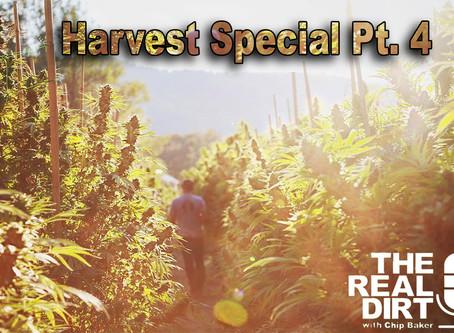 Cannabis Culture & Community: Harvest Special Pt. 4