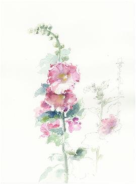 4. la rose trémière.JPG