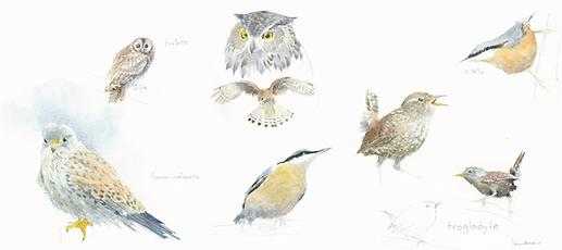 14. oiseaux des bois.png