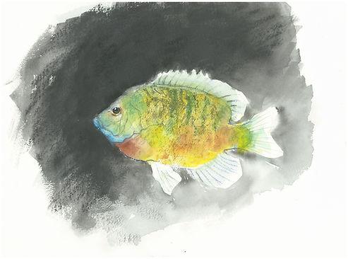29. le poisson jaune.JPG