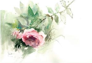 la rose de mon jardin.JPG