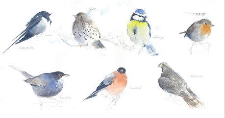 30. les 7 oiseaux.JPG