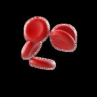 Blood Cells.L16.2k.png