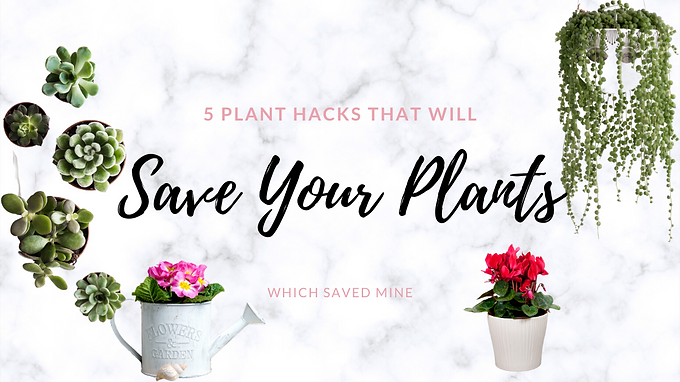 5 Hacks to Save Your House Plants